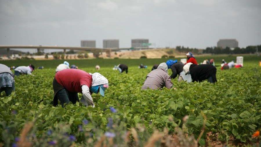 Bishops Support Migrant Farmworkers during Coronavirus Pandemic